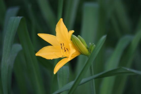 花の季節!_d0070814_7174661.jpg