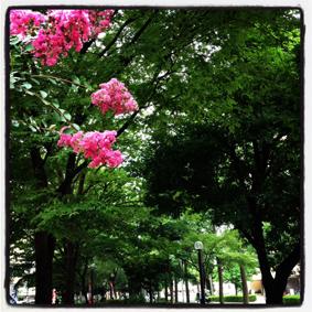夏の匂い_a0133915_22584753.jpg