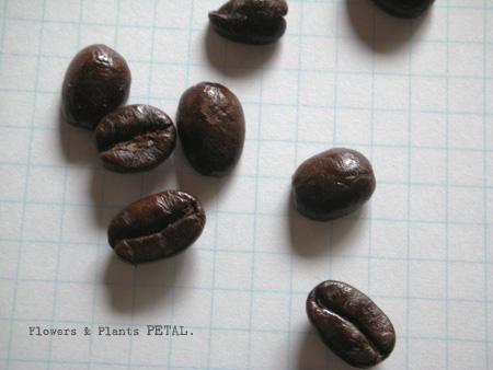 珈琲豆のかわいさよ!_d0157716_1628252.jpg
