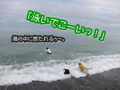 白馬旅行 2012夏の巻 2_e0192217_12314015.jpg
