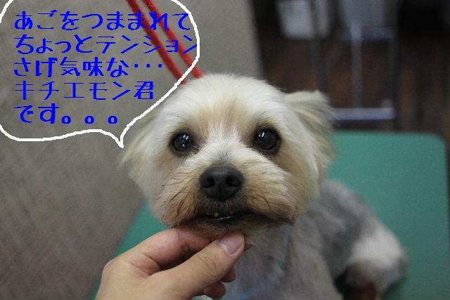 b0130018_0103682.jpg