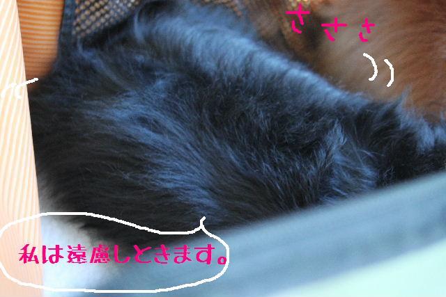 b0130018_024137.jpg