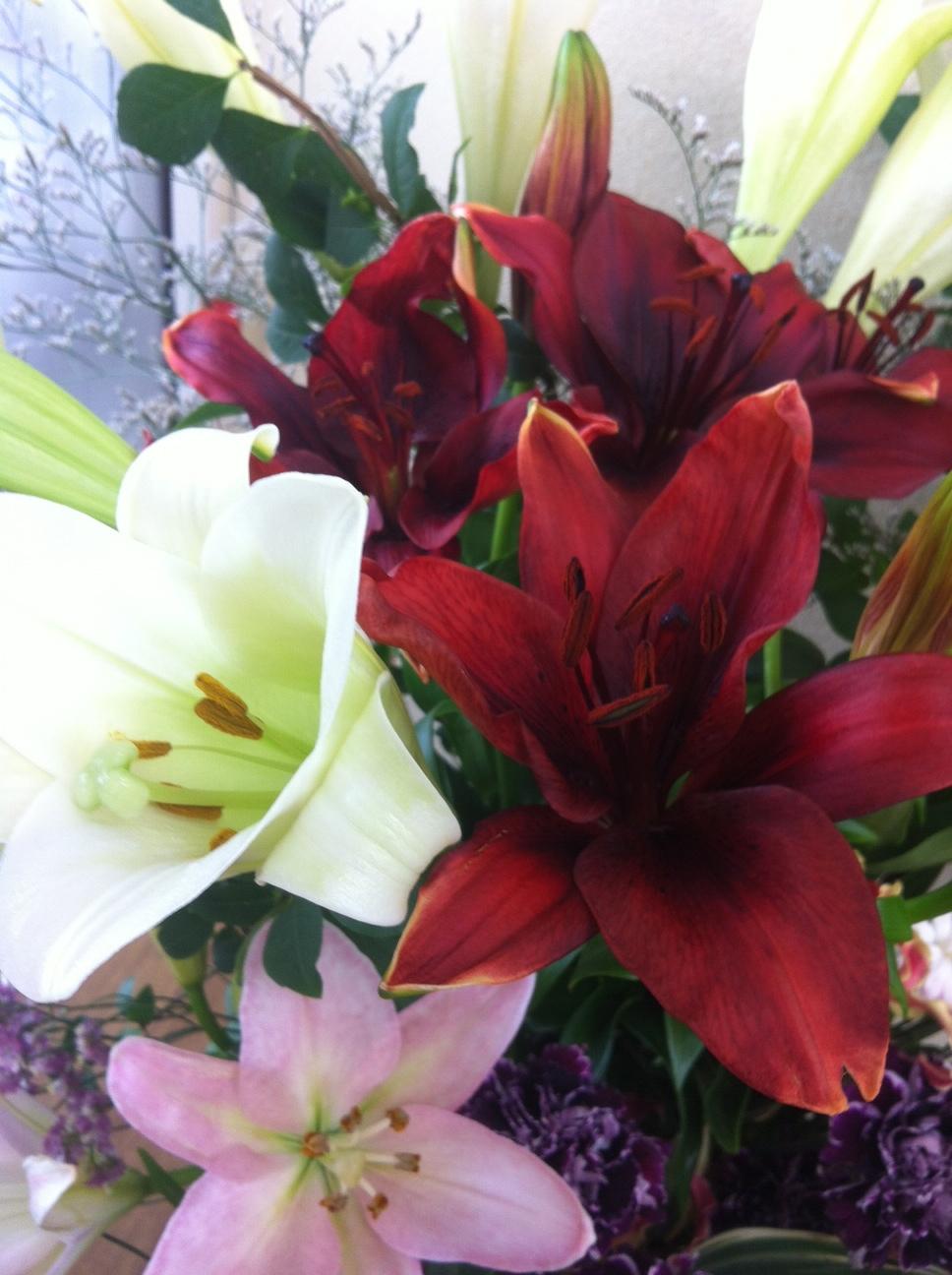 今週のお花とセール情報_a0200423_1922729.jpg