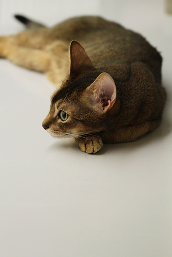 [猫的]ヨーグルト_e0090124_0461719.jpg