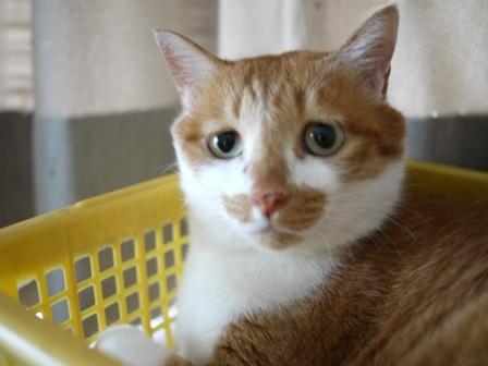 猫のお友だち ちゃーくんちょびくんペコちゃん編。_a0143140_19532417.jpg
