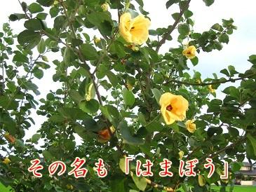 b0151748_11571975.jpg