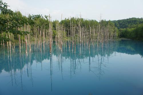青い池_f0181557_18562771.jpg