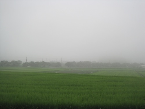 篠山の霧_f0053164_9513222.jpg