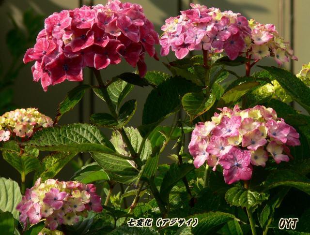 f0166871_75873.jpg