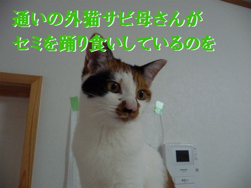 e0072606_14394463.jpg