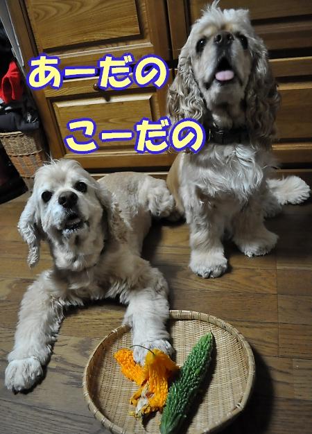 b0067012_617766.jpg