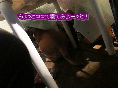 白馬旅行 2012夏の巻 3_e0192217_7321639.jpg