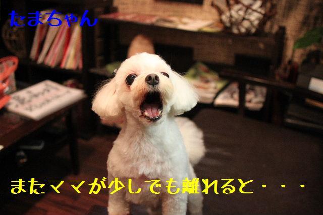 強いんだなぁ~!!_b0130018_0145843.jpg