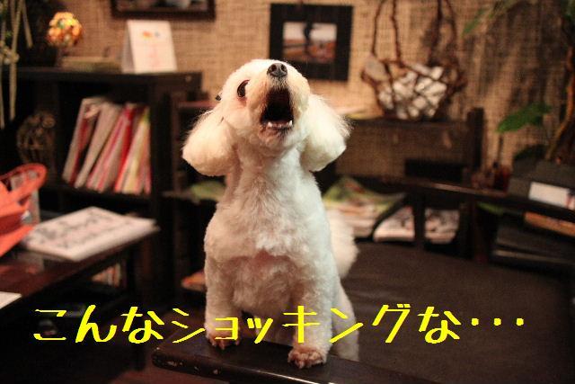 強いんだなぁ~!!_b0130018_015499.jpg