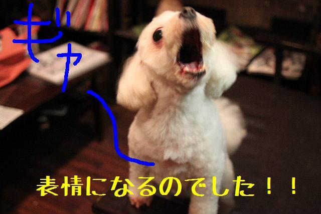 強いんだなぁ~!!_b0130018_015870.jpg