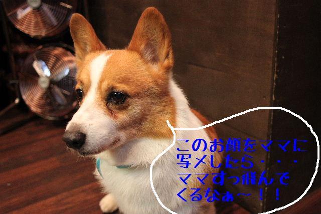 強いんだなぁ~!!_b0130018_0192986.jpg