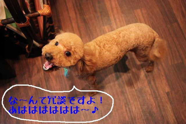 強いんだなぁ~!!_b0130018_0245952.jpg