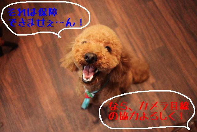 強いんだなぁ~!!_b0130018_025565.jpg