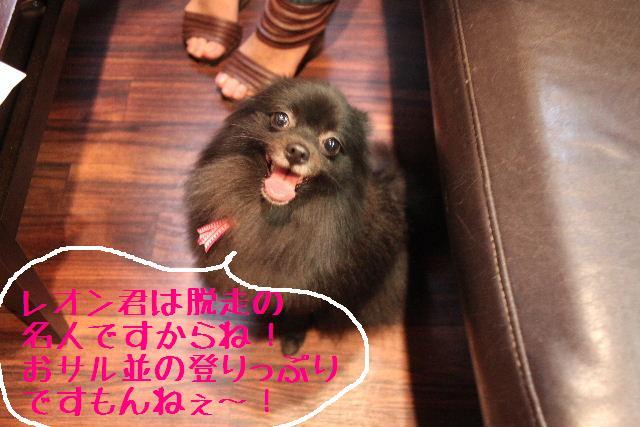 強いんだなぁ~!!_b0130018_0283198.jpg