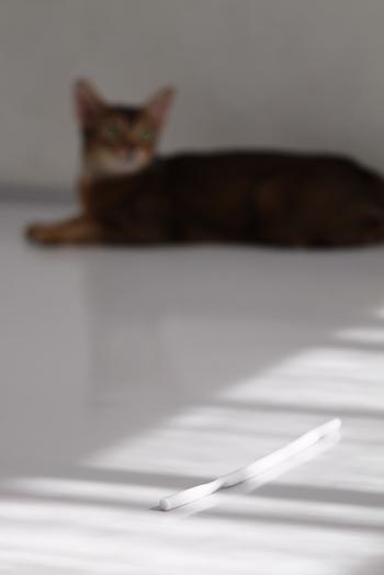 [猫的]コンナモノ_e0090124_074087.jpg
