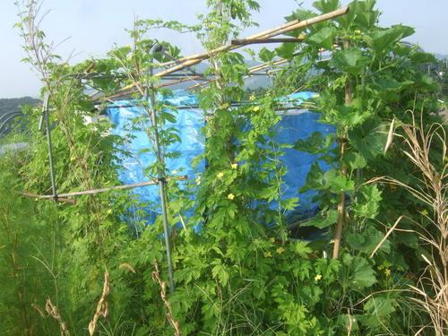 野菜畑は草原....ゴーヤも冬瓜も!_b0137932_2203772.jpg