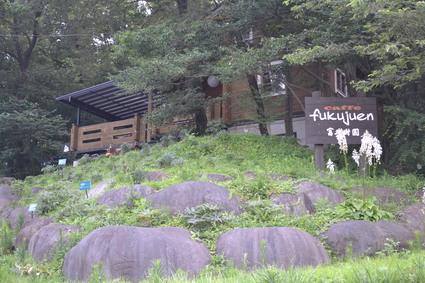 富久樹園カフェに咲くヤマユリ  2012_e0228938_18201185.jpg