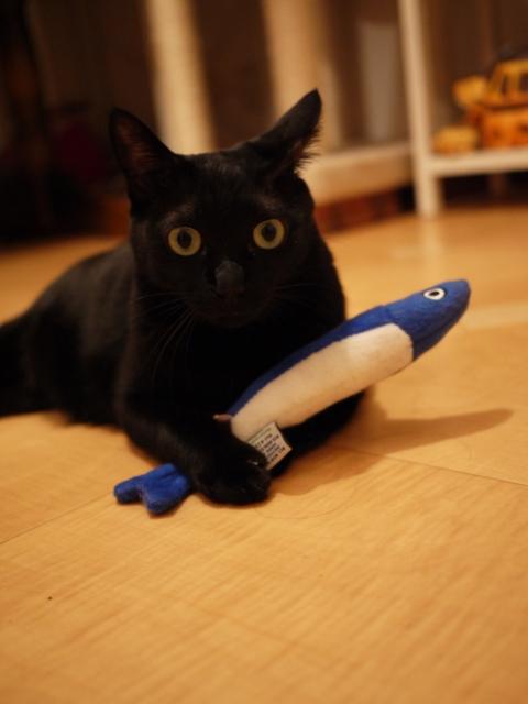 いわしちゃん猫 のぇる編。_a0143140_2315134.jpg
