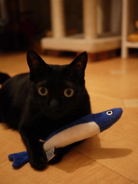 いわしちゃん猫 のぇる編。_a0143140_23163827.jpg