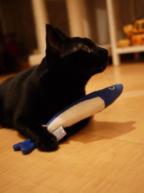 いわしちゃん猫 のぇる編。_a0143140_23173712.jpg