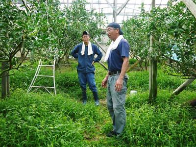 小春農園 デコポン(肥後ポン)の成長記録_a0254656_1815510.jpg