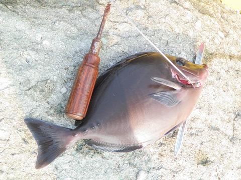魚突き_d0007657_9243629.jpg