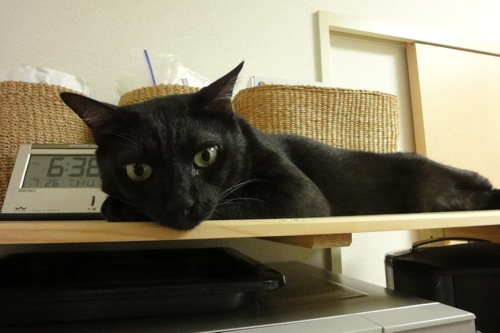 猫置き時計_f0054859_12113547.jpg