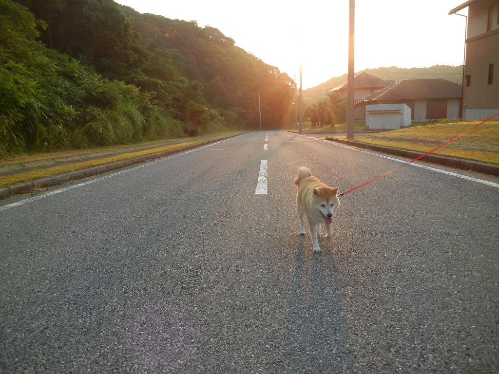'12,7,27(金)どっちの道に行こうかな・・・?_f0060461_1413281.jpg
