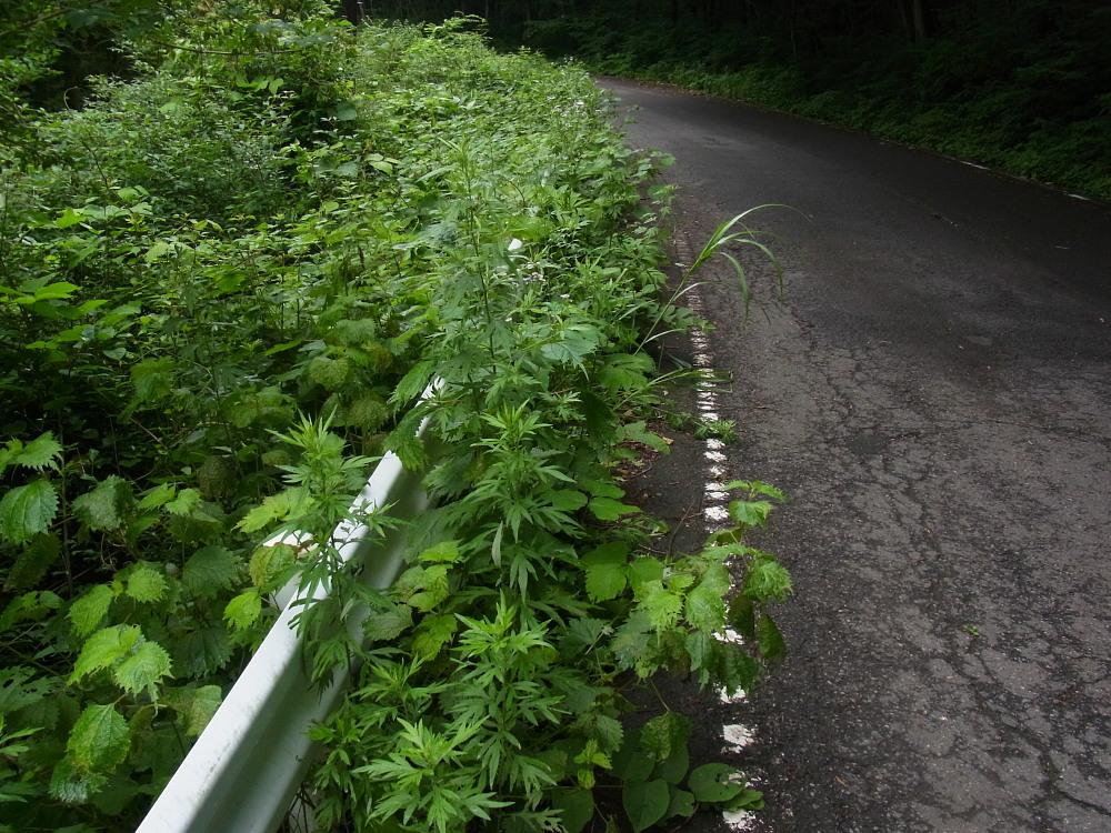 ジョウザンミドリシジミ  路上バトル  2012.7.22福島県③_a0146869_6541440.jpg