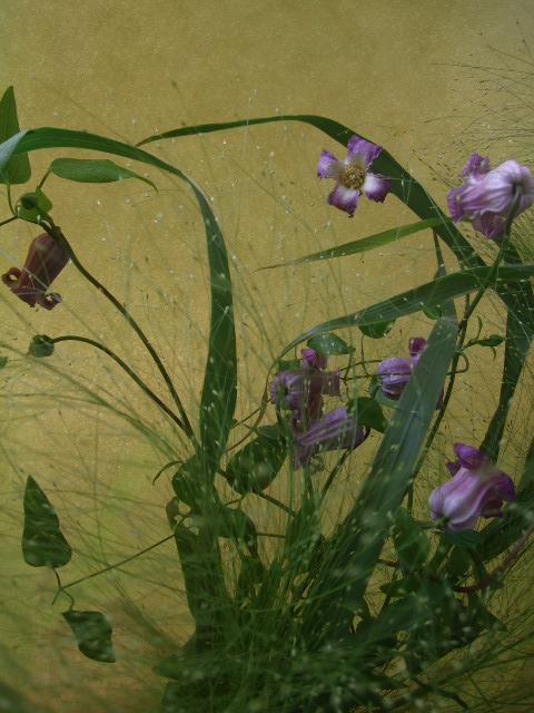 オークリ-フ(クレマチスの花束)_f0049672_1783262.jpg