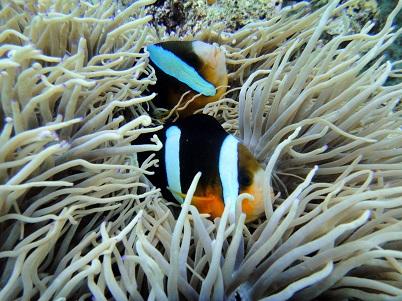沖縄の海は魚がいっぱい!!_a0156273_1720680.jpg
