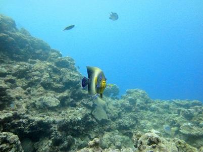 沖縄の海は魚がいっぱい!!_a0156273_17221698.jpg