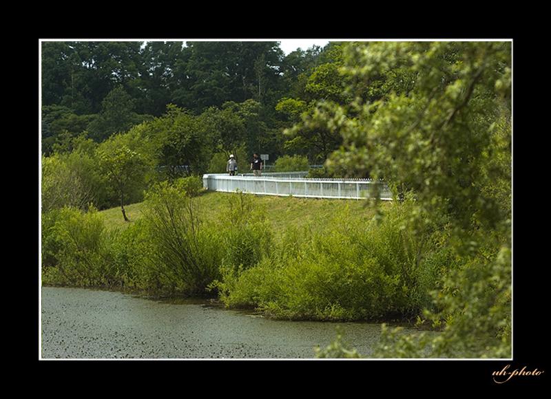 あいの里公園のトンネウス沼の釣り人_b0181889_671186.jpg