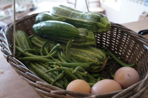 ジャガイモの収穫とやんちゃなヒヨコ達~7月の畑_f0106597_2494672.jpg