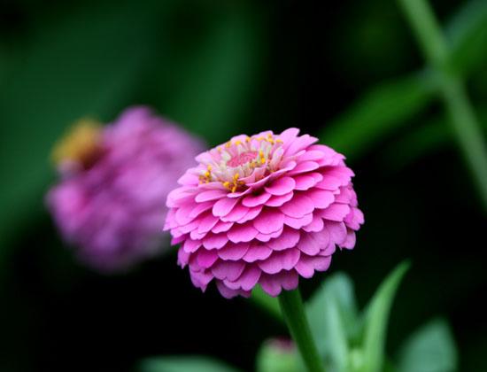 菜園 夏の花盛り_e0048413_22194070.jpg