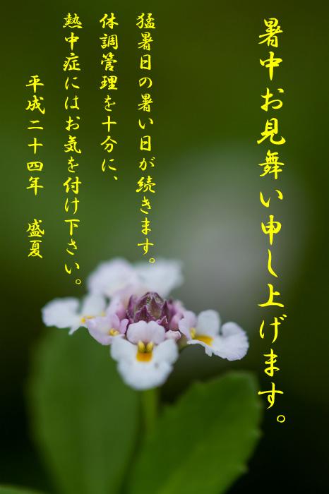f0173817_14394557.jpg