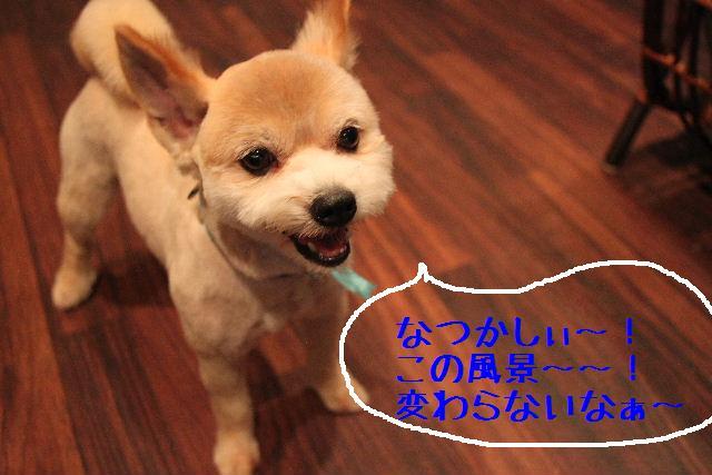 b0130018_22483326.jpg
