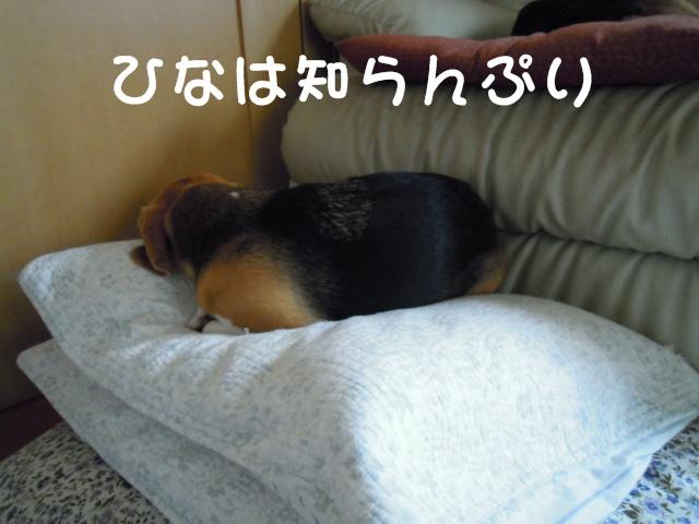 c0166622_1514945.jpg