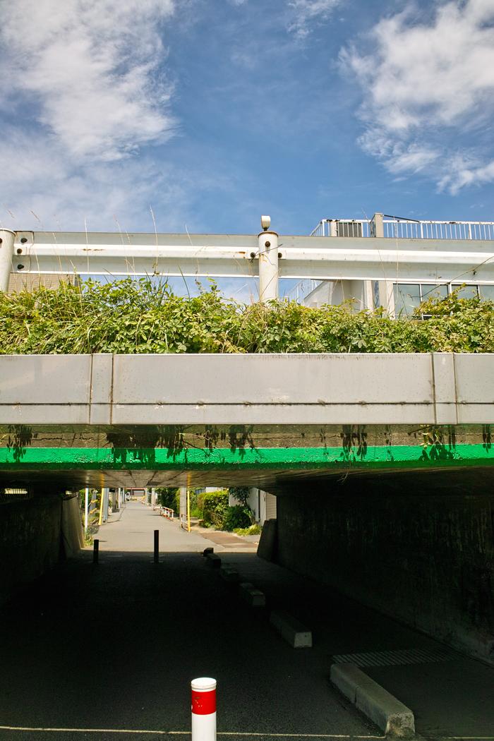 DP1xと中判フィルムGA645Wで巡る夏の坂川_c0223825_1341128.jpg