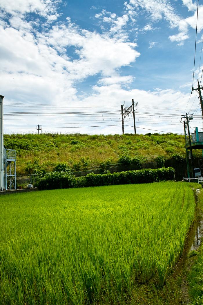 DP1xと中判フィルムGA645Wで巡る夏の坂川_c0223825_14333741.jpg