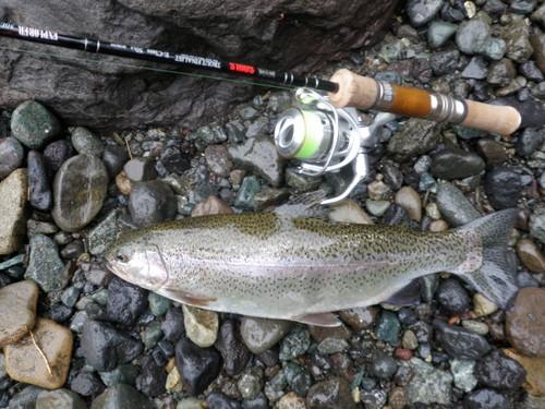 ・FISHING REPORT_a0165135_16381258.jpg