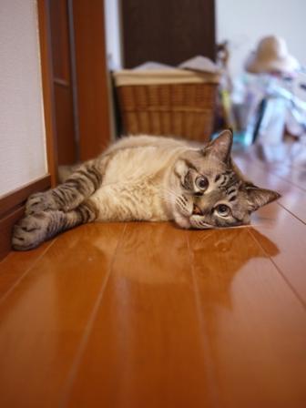 猫のお友だち ギンくん編。_a0143140_18534742.jpg