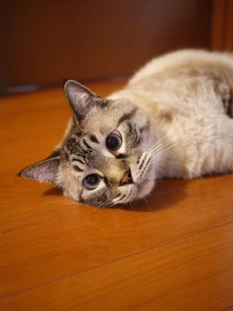猫のお友だち ギンくん編。_a0143140_1856156.jpg
