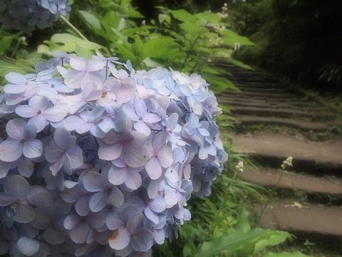 ◆鎌倉スナップ・その3 浄智寺①_b0008655_10185847.jpg