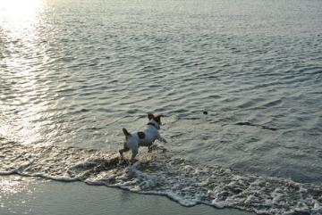 夕日に向かって泳げ。_d0143957_20491614.jpg